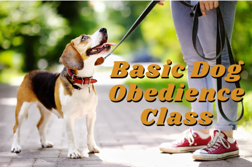 Basic Dog Obedience Class